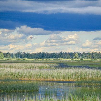Lubana wetland complex